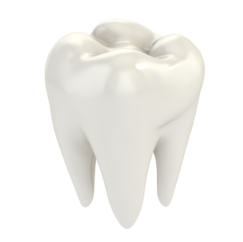 White Molar tooth rendered on white background